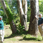 Arborists Tree Walk  (3)